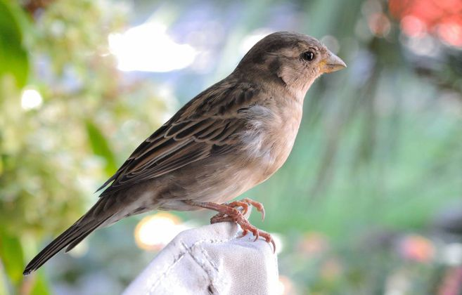 El olor de las aves infectadas por malaria atrae mas a los mosquitos