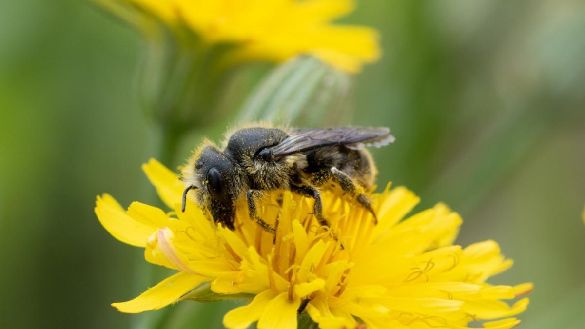 Primeros auxilios tras la picadura de abejas y avispas: ¿como reaccionar? ¿Como se puede prevenir?