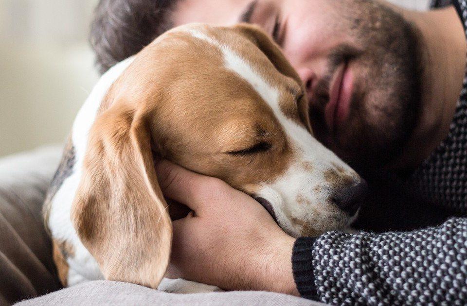 Tres lecciones que tu perro puede darte en cuarentena