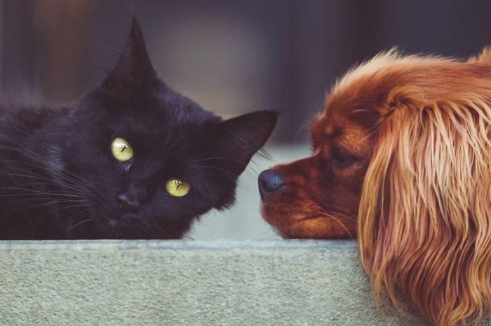 Mascotas ayudaron a mantener la salud mental y reducir estres segun estudio