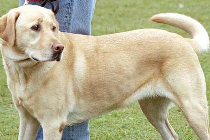 Como calcular cientificamente la edad 'humana' de los perros
