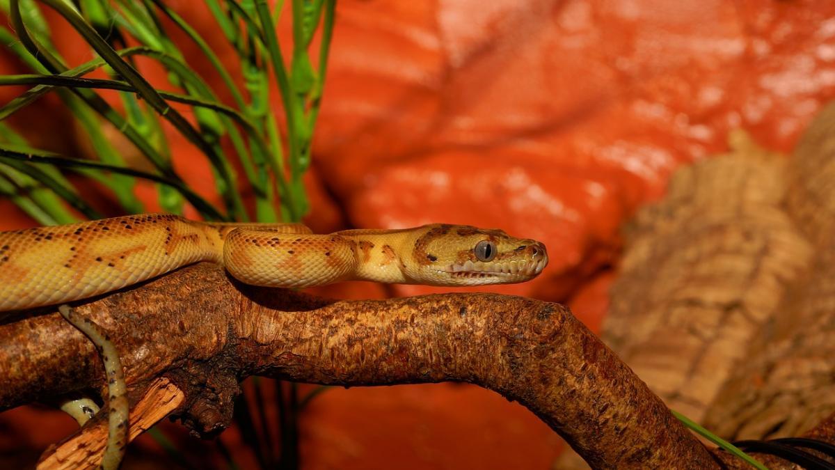¿Te gustaria una serpiente como animal de compañia? Todo lo que necesitas saber sobre sus cuidados esenciales