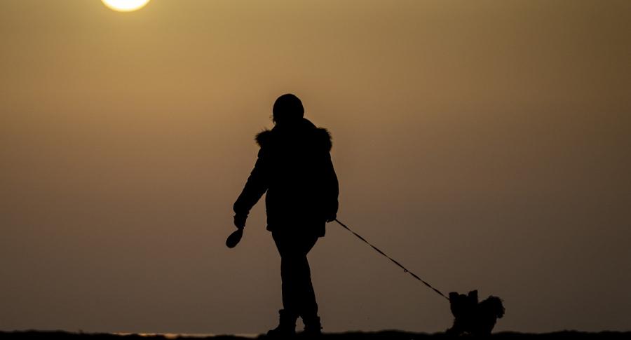 Los perros acompañaron a los primeros humanos que llegaron a America del Norte