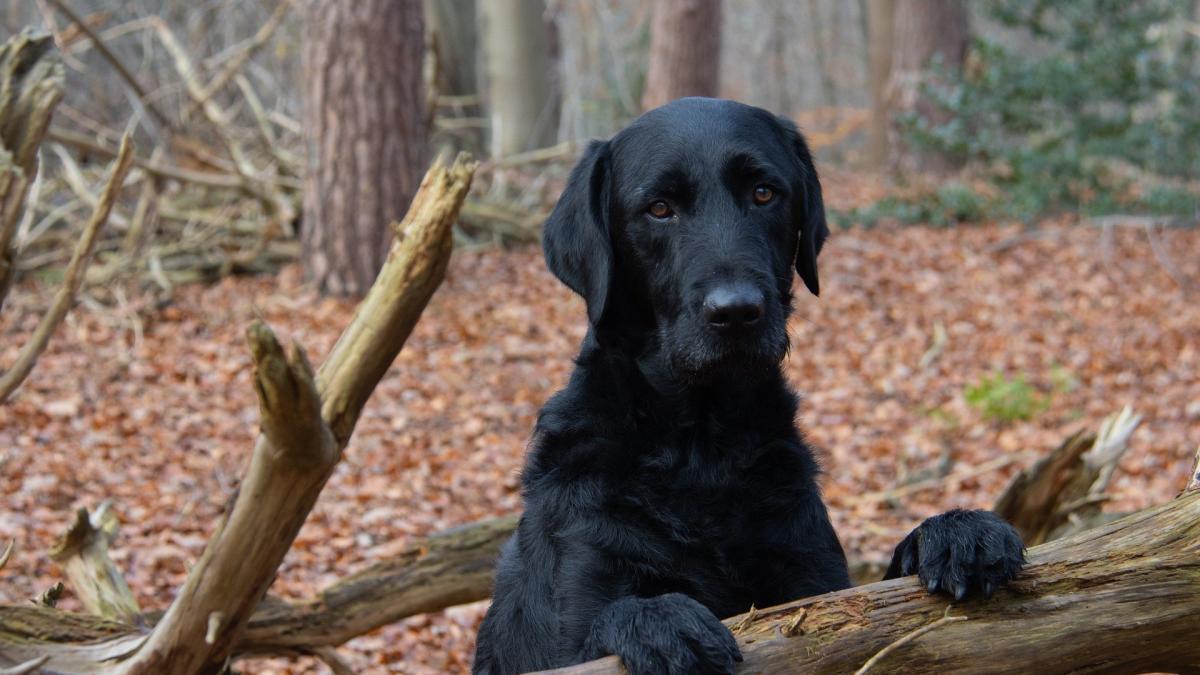 Los perros tienen conciencia corporal y comprenden las consecuencias de sus propias acciones