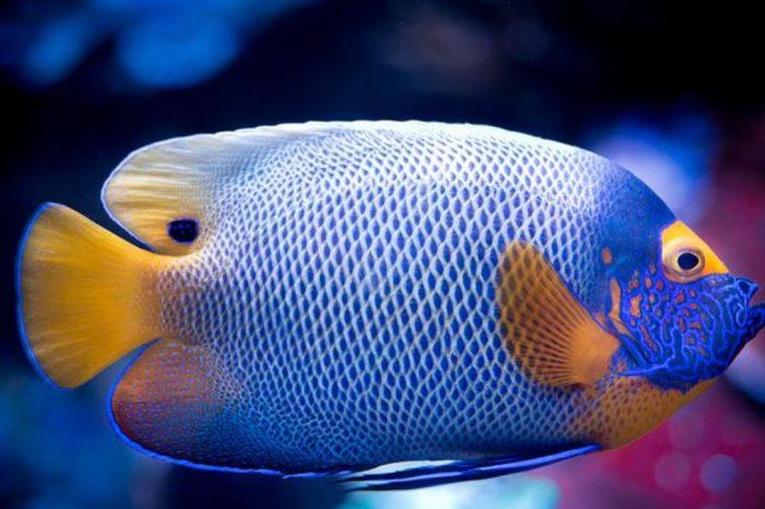 Coloridos, bellos y muy hipnoticos. Consejos para iniciarse en el cuidado de los peces tropicales