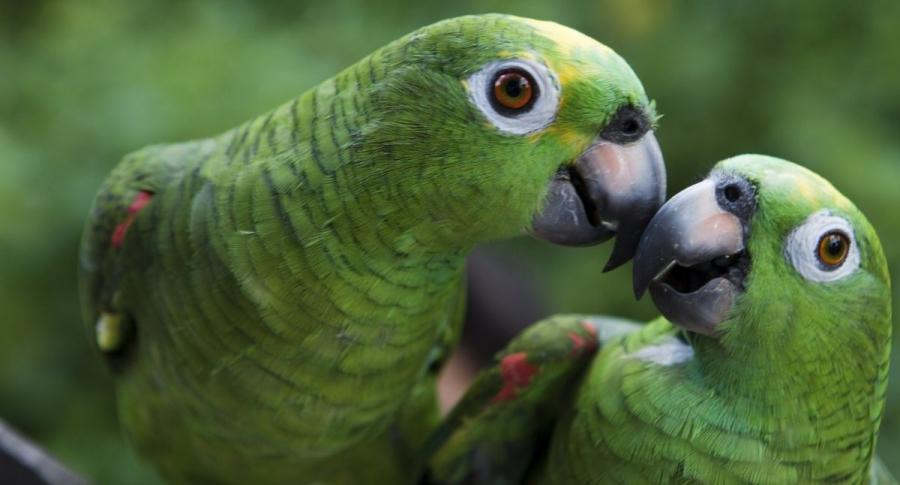 Bogota ayuda a los animales silvestres en el centro de atencion mas sofisticado de la region