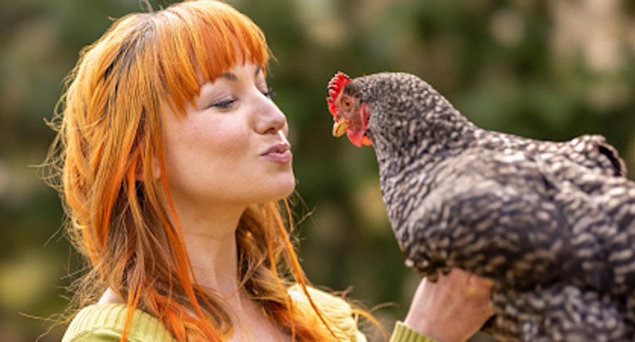 """""""No besen ni abracen a su gallinas"""": inusual alerta, por aumento de casos de salmonella"""