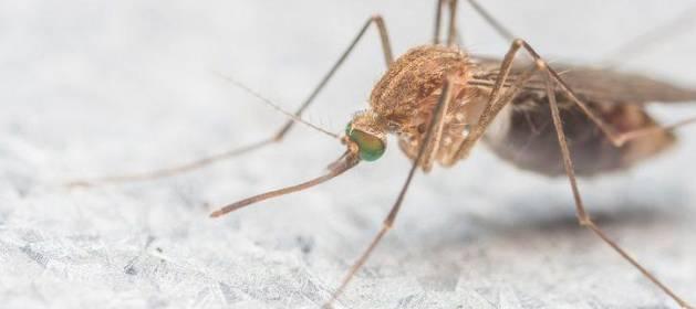 Y ahora el virus del Nilo: 16 ingresados en Sevilla, 5 de ellos en la UCI