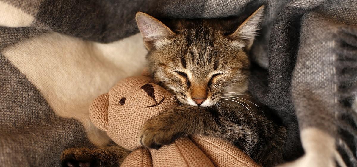 Cómo tu gato te dice te quiero