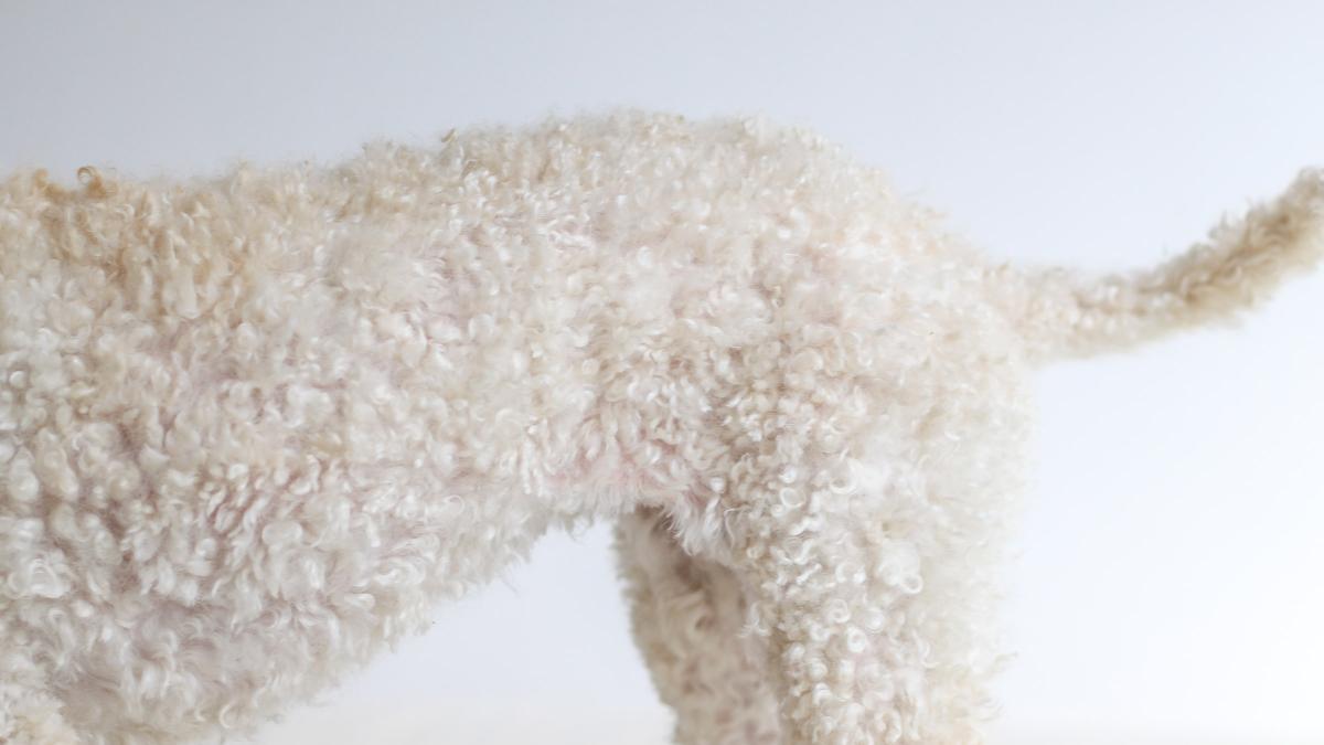 ¿Por que se produce y cuanto dura la muda de pelo de los perros? Consejos para hacerla mas llevadera este otoño
